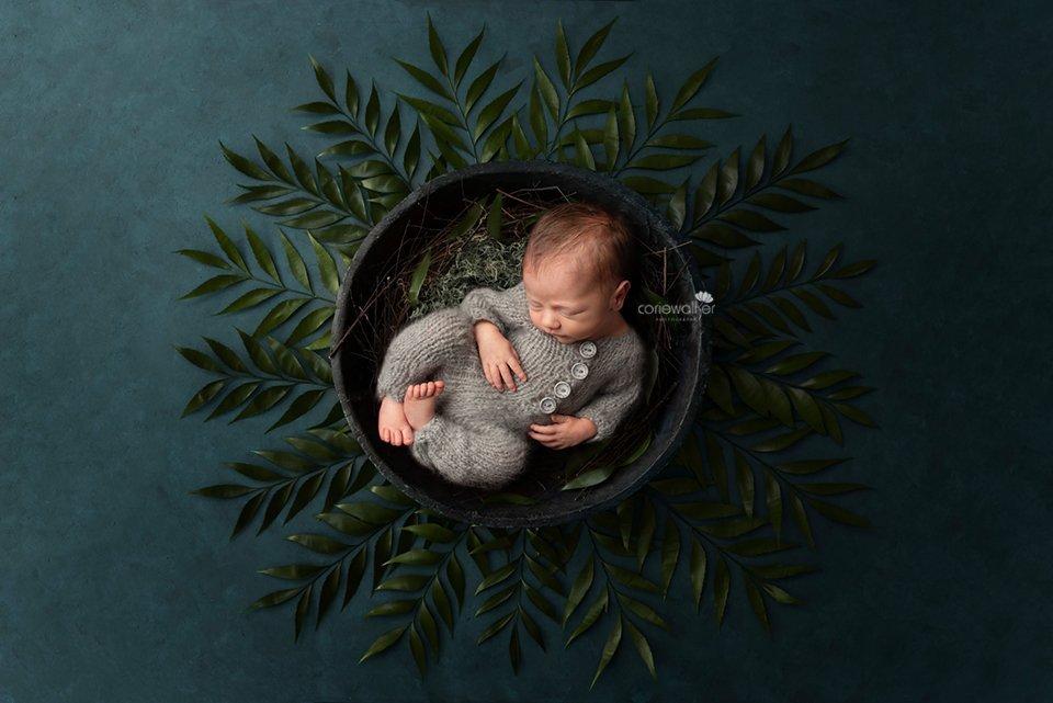 jungle leaves newborn