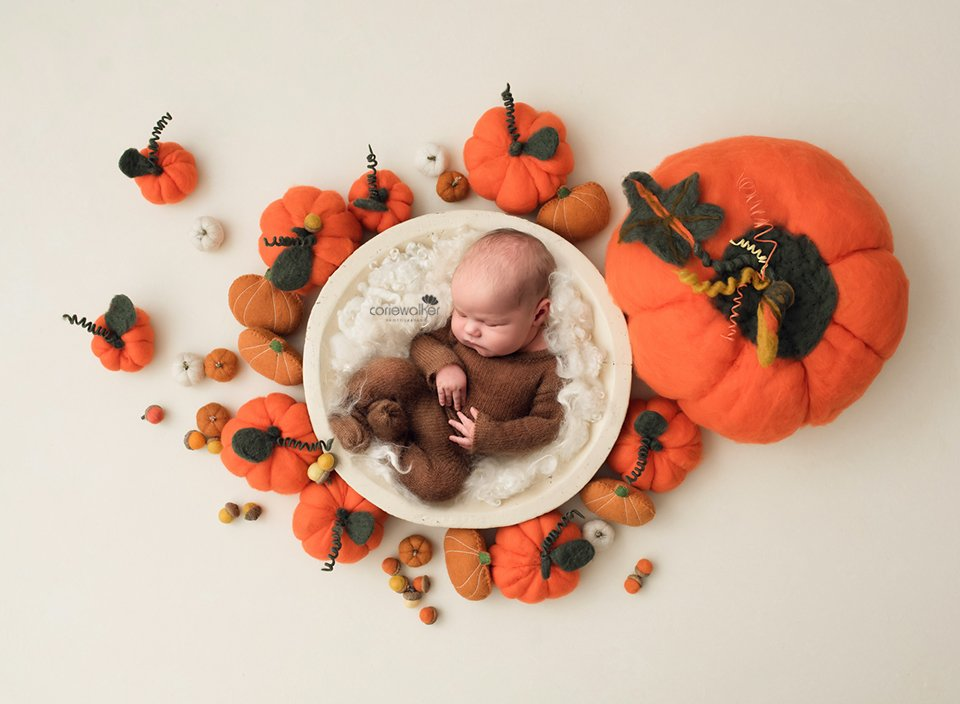newborn pumpkins photo