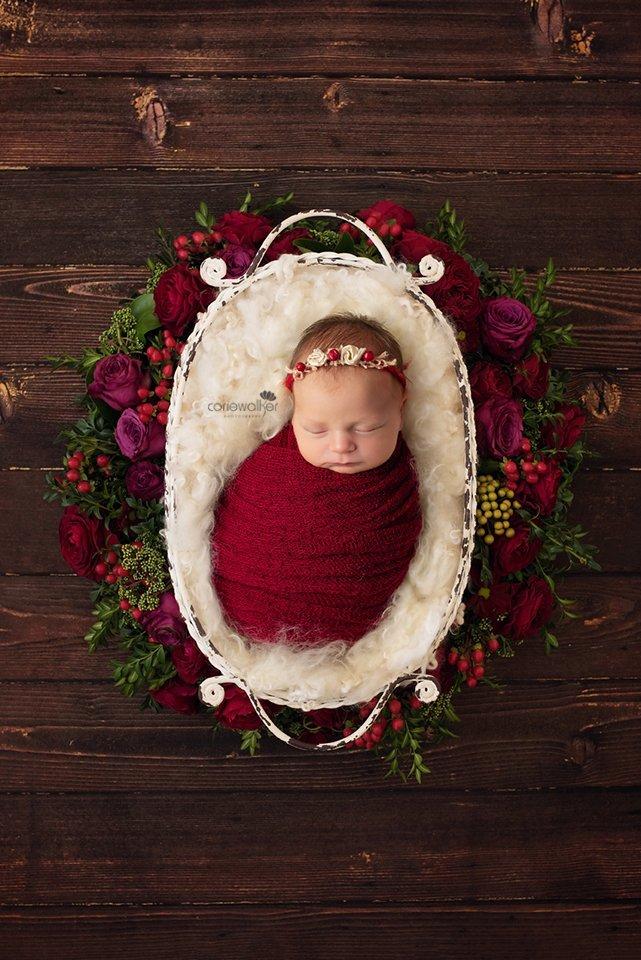 newborn rustic red roses photo