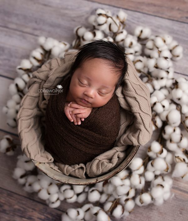 Best Newborn Studio   Hudson OH   Welcome Shepard!